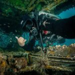 Dive & mangrove discovery